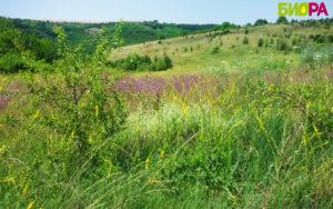 Натурален-пчелен-мед-от-производител.-Био-пчелна-ферма-БИОРА.Билков-акация-липов-липа-кориандър, natural honey, bee farm Biora, Bulgaria, Bee gard Biora, honning, honig, Honigbienenfarm Biora, Bulgarien honig, Ливади до пчелин Биора - натурален пчелен мед от производител