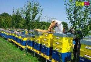 Натурален-пчелен-мед-от-производител.-Био-пчелна-ферма-БИОРА.Билков-акация-липов-липа-кориандър, natural honey, bee farm Biora, Bulgaria, Bee gard Biora, honning, honig, Honigbienenfarm Biora, Bulgarien honig, Пчелин Биора - натурален пчелен мед от български производител