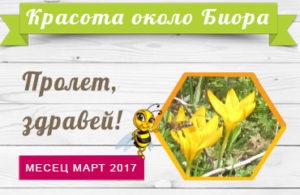Мед Биора Пролет в пчелин Биора