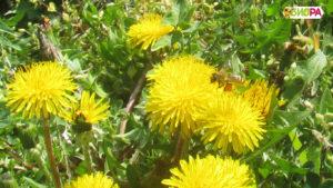 Натурален истински пчелен мед от производител, Пчелен мед Биора