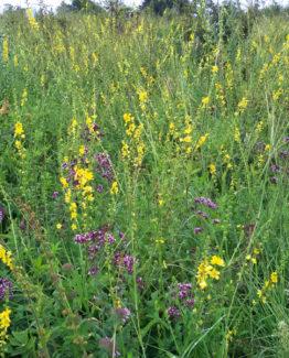 Билков многоцветен мед – тенекия 24 кг