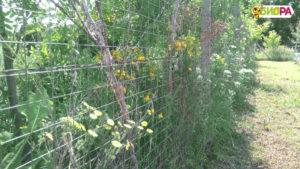 Натурален пчелен мед БИОРА от собствен пчелин в Природен парк Русенски лом, акация, липа, билки. Natural real honey, Bulgarian bee farm Biora