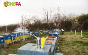 Натурален-пчелен-мед-от-производител.-Био-пчелна-ферма-БИОРА.Билков-акация-липов-липа-кориандър, natural honey, bee farm Biora, Bulgaria, Bee gard Biora, honning, honig, Honigbienenfarm Biora, Bulgarien honig, Натурален мед от пчелна ферма Биора - истински мед от производител