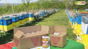 Пчелен мед от пчелин Биора, Природен Парк Русенски Лом. БИОРА - Две могили, производител на качествен натурален мед