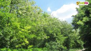 Пчелин Биора - натурален пчелен мед. Акация и пролетни билки в Природен Парк Русенски Лом