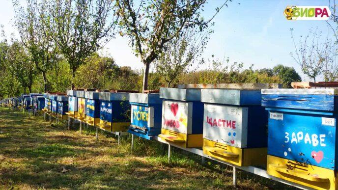 Липов мед – 720 г, 10 буркана