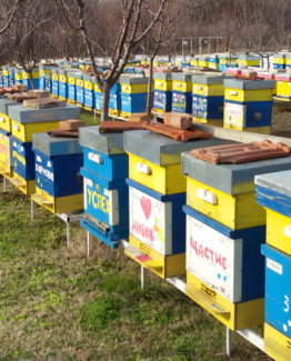 Липов мед – 720г, 4 буркана
