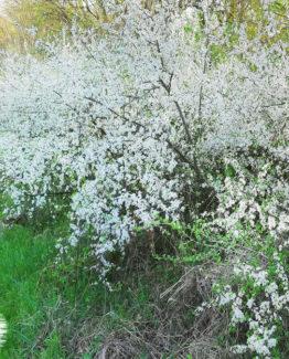Пролетен многоцветен мед с рапица (канола), шипки, глог – 720г, 4бр