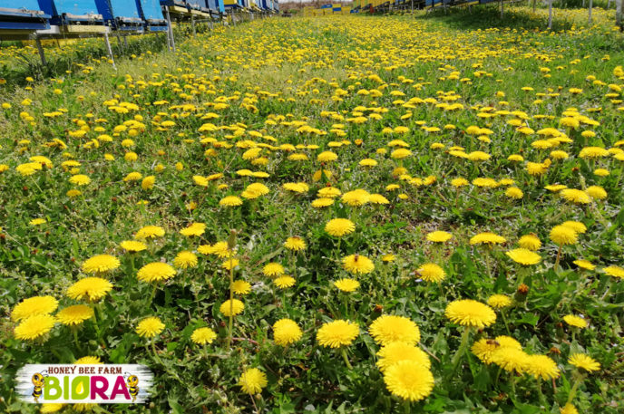 Пролетен многоцветен мед с рапица (канола), шипки, глог – 720г
