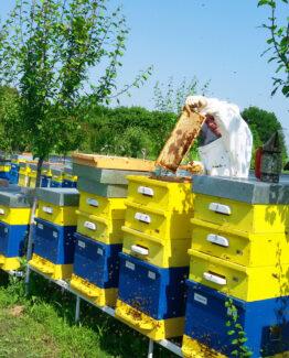 ИЗЧЕРПАН! Липов мед – 720г, 10 бр, РЕКОЛТА 2021